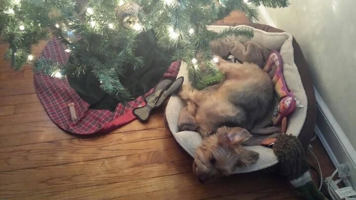Jack under tree
