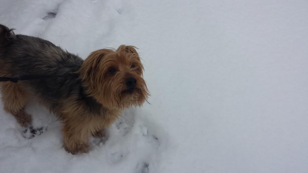 snow c