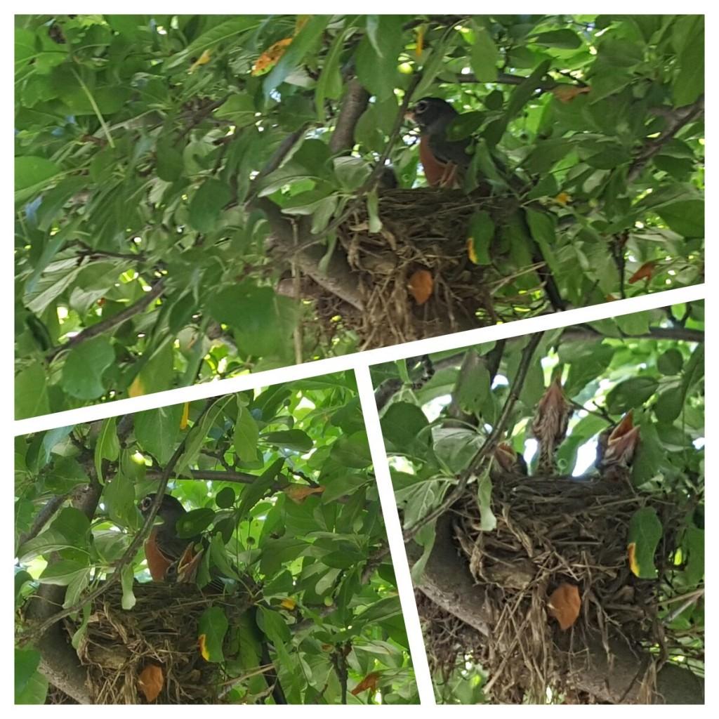 Birds a
